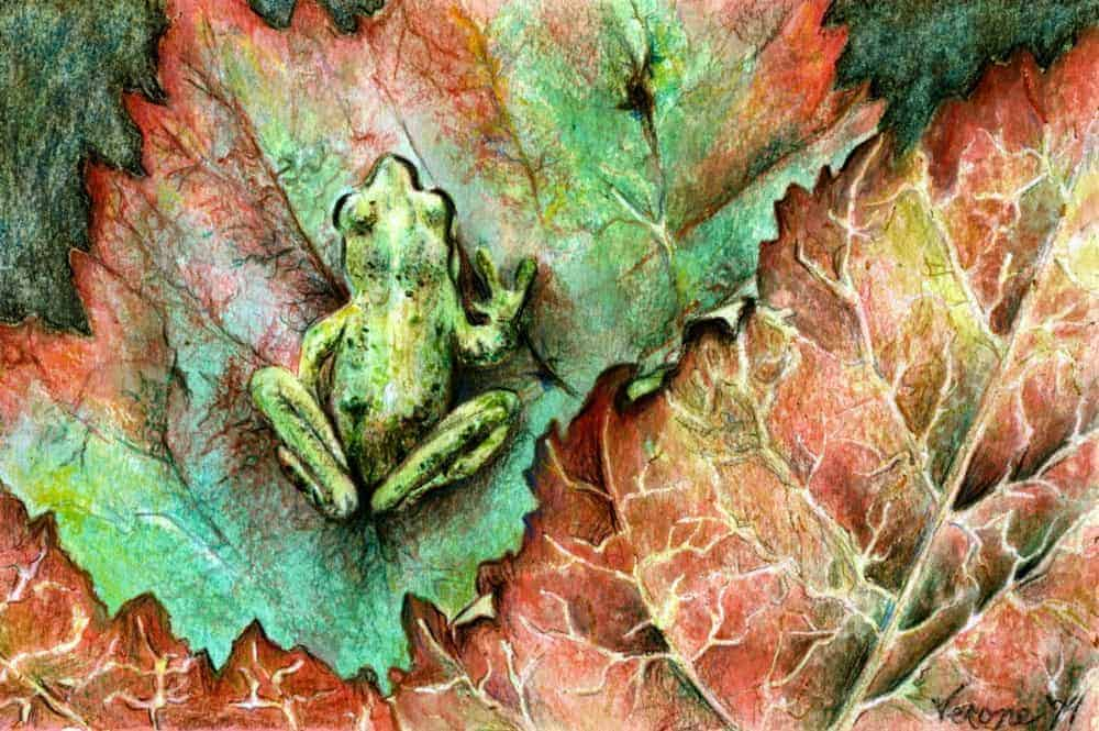 Camouflage Frog Limited Edition Print On Paper W2 Border 8 X
